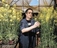 Les plantes disposent-elles d'une forme d'« intelligence » ?