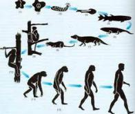 L'évolution est-elle seulement darwinienne ?