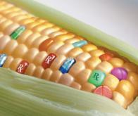 OGM : pour un débat serein, honnête et global