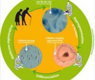 Vieillissement : remonter l'horloge biologique n'est plus un objectif impossible…