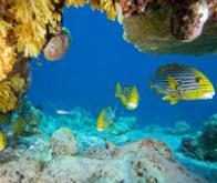 Espèces marines privées d'habitat : réchauffement planétaire en cause !