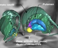 Existe-t-il dans les profondeurs du cerveau un centre général de la motivation ?