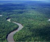 Forêt amazonienne : 1% des espèces d'arbres stockent la moitié du carbone !