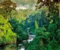 Forêt et réchauffement : le rôle de l'azote mieux compris
