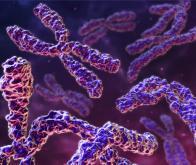 Génétique : les gènes paternels favorisés chez les mammifères !