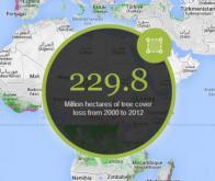 Google va-t-il sauver les forêts tropicales ?