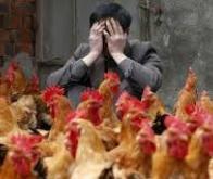 Grippe aviaire : le pire est peut-être devant nous…