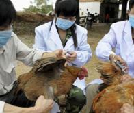 Grippe H7N9 en Chine : plus du tiers des patients sont décédés