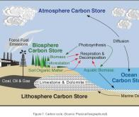 L'homme a profondément modifié le cycle global du carbone au niveau planétaire