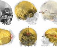 Hommes et grands singes, un cerveau pas si différent