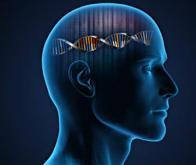 Identification d'un gène-clé dans une forme de déficience intellectuelle