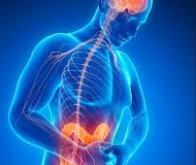 Inflammation chronique de l'intestin et maladies neurodégénératives : les liaisons dangereuses…