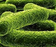 La bactérie mangeuse de plastique : un nouvel espoir contre la pollution