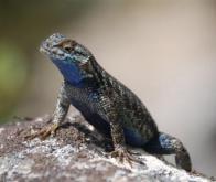 La biodiversité ne réduit pas la transmission de maladies des animaux à l'homme