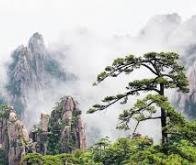La Chine et l'Inde à l'avant-garde du « verdissement » de la planète…