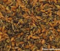 La consommation régulière de grains entiers et de fibres réduirait les risques de diabète et de ...
