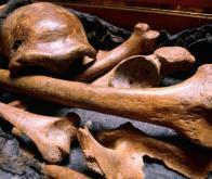 La datation au carbone 14 fait un bond de 40 000 ans dans le passé !