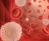 La différenciation des cellules sanguines, sous dépendance de contraintes mécaniques