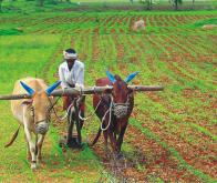 La lutte contre le changement climatique passe aussi par une mutation de l'agriculture