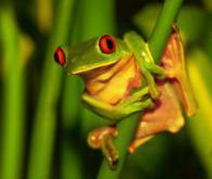 La moitié des plantes et un tiers des animaux touchés par le changement climatique d'ici 2080