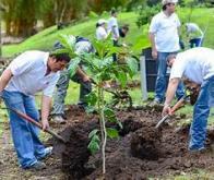 La reforestation, un outil majeur contre le réchauffement climatique