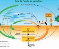 La régulation de l'azote chez les plantes mieux comprise