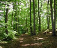 La relation entre le sol forestier et l'oxyde d'azote mieux comprise