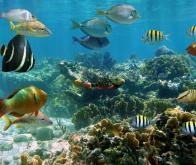 La vie marine sauvage gravement menacée