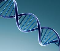 """L'ADN """"poubelle"""" commence à révéler son rôle caché !"""