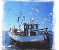 L'ADN pour lutter contre la pêche illégale