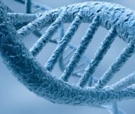 L'ADN remplacera-t-elle les disques durs de nos ordinateurs ?