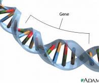 L'agressivité pourrait avoir une composante génétique