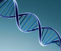 L'alphabet génétique s'agrandit !
