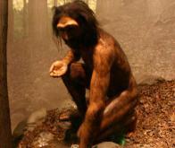 L'ancêtre éteint de l'homme, l'Homo erectus, cuisait déjà ses aliments