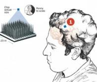 L'armée américaine développe une puce implantable dans le cerveau des soldats