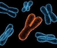 Le chromosome Y est-il plus ancien que l'homme lui-même ?