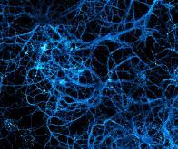 Le Blue Brain Project résout un très ancien problème de neuroscience