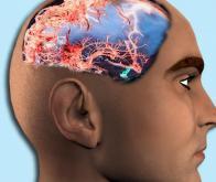 Le cerveau continue à grandir toute la vie…