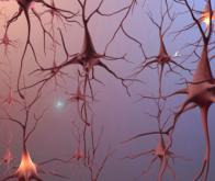 Le cerveau modélisé