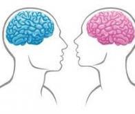 Le cerveau serait asexué…