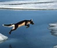 Le changement climatique affecterait les relations entre espèces dans les régions polaires