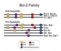 Le ciblage direct des protéines BCL-2 : une nouvelle voie thérapeutique contre les leucémies ?