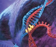 Le génome révèle un nouveau niveau d'organisation inconnu…