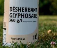 Le glyphosate affecte le cerveau des rats