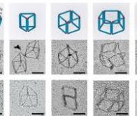 Le méta-ADN : des structures micrométriques à base d'ADN