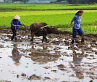 Le réchauffement climatique aura des conséquences sur la qualité nutritionnelle des productions ...