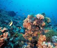 Le réchauffement climatique va affecter la biomasse océanique