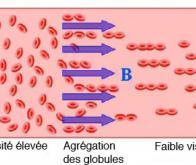 Le sang fluidifié par un champ magnétique