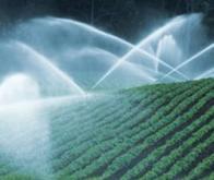 L'eau virtuelle : un baromètre des ressources globales