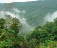 Les arbres stockeraient moins de carbone que prévu…